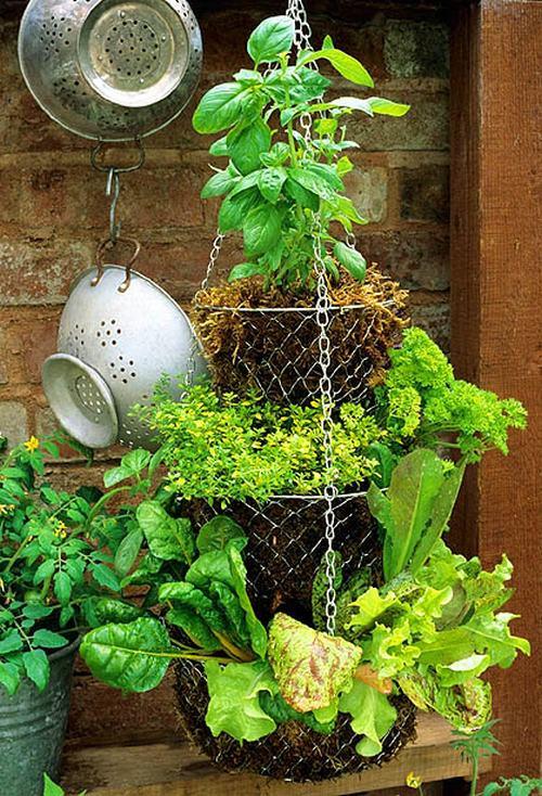 gocnhoxanhumcaycoi9 35021 Gợi ý những cách cực kì đơn giản để tạo khu vườn mini xinh xắn