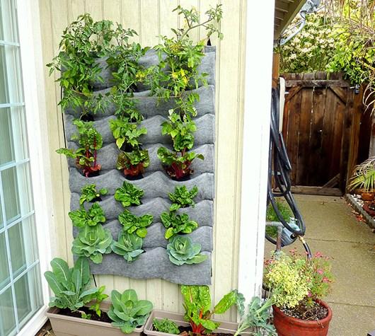 Ý tưởng làm vườn treo cực đơn giản 8