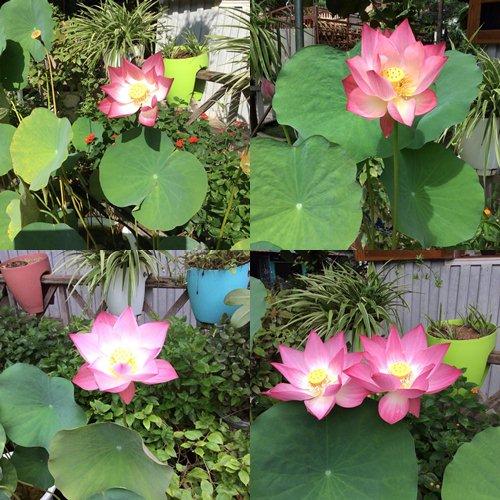 Mê mẩn ngôi nhà gỗ tràn ngập hoa trên cao nguyên đá Hà Giang 14