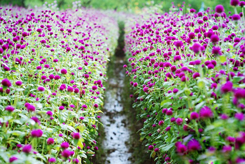 8 địa điểm chụp ảnh đẹp ở Hà Nội 5