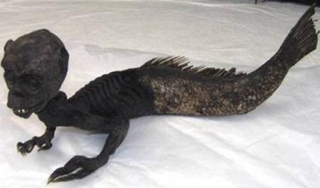 """Sự thật về xác ướp """"nàng tiên cá"""" nổi tiếng 2"""