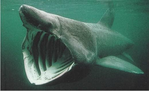 """10 """"quái vật"""" dưới biển sâu 8"""