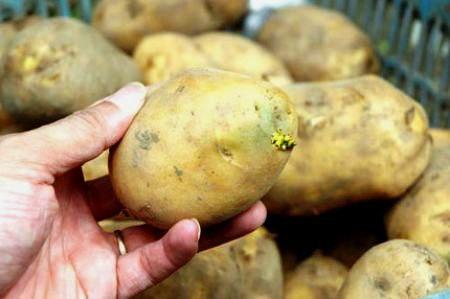 Cách ăn khoai tây tốt nhất cho sức khỏe 1
