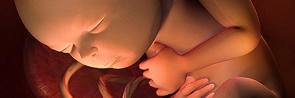 Tuần thai thứ 33: Mẹ tăng cường ăn trái cây và rau  6