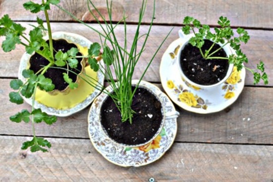 4 cách tạo khu vườn mini cho căn nhà của bạn 11