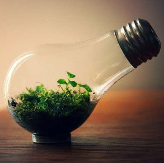4 cách tạo khu vườn mini cho căn nhà của bạn 12