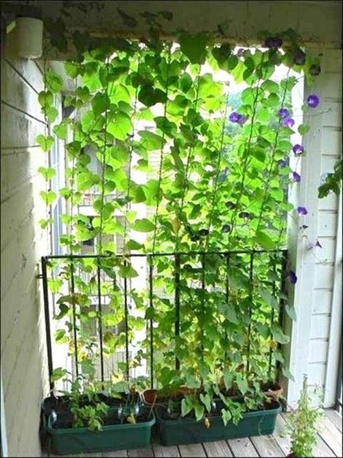 4 cách hay để sân vườn vừa mát vừa riêng tư 4