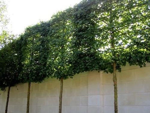 4 cách hay để sân vườn vừa mát vừa riêng tư 2