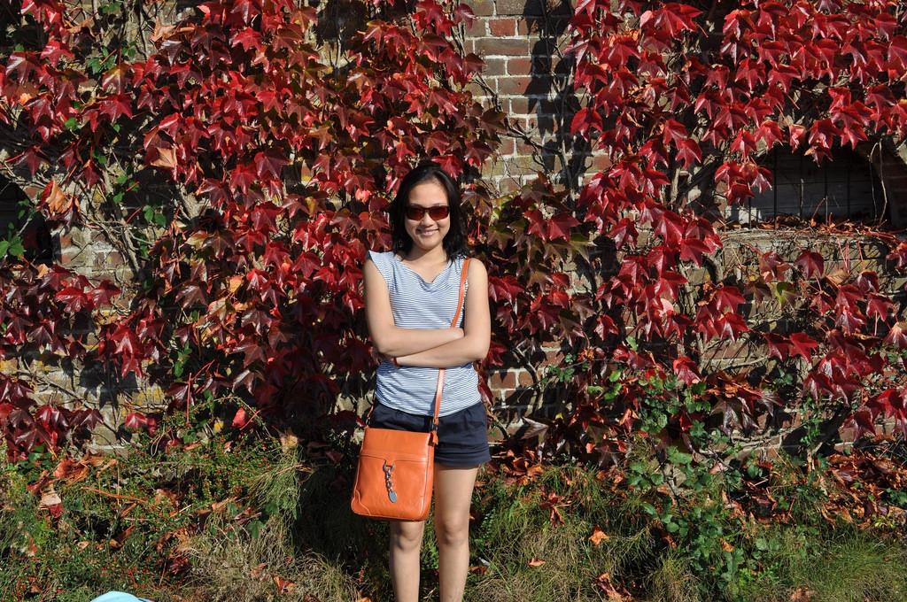 Blogger Bambou