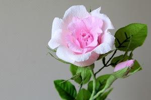 Làm hoa hồng giấy đẹp như hoa thật 11