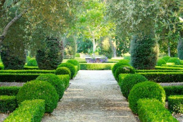 Trang trí sân vườn bằng những mẫu tỉa cây cảnh đẹp 2