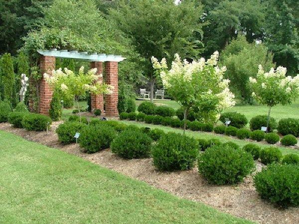 Trang trí sân vườn bằng những mẫu tỉa cây cảnh đẹp 3