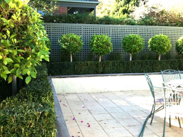 Trang trí sân vườn bằng những mẫu tỉa cây cảnh đẹp 5