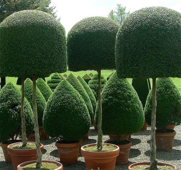 Trang trí sân vườn bằng những mẫu tỉa cây cảnh đẹp 4