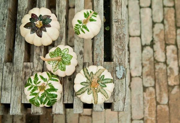 Bí ngô mini - ý tưởng tuyệt vời cho khu vườn nhỏ trong nhà phố 13