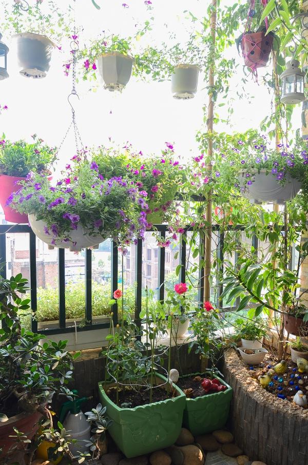 Ngắm căn hộ có góc vườn truyền cảm hứng cho cả khu chung cư ở Hà Nội 5