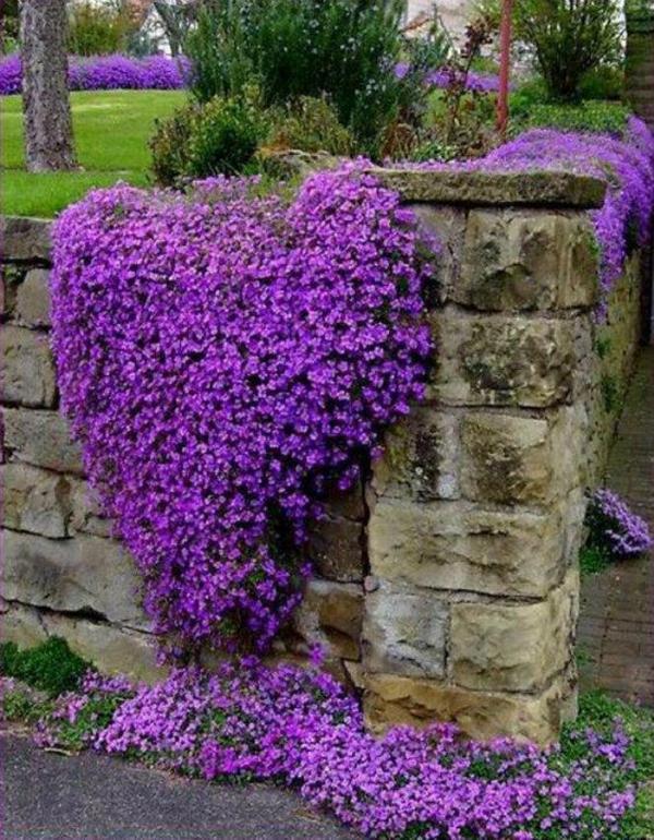 nhung hang rao hoa day cam hung cho ngoi nha Những mẫu hàng rào hoa cực đẹp và tinh tế