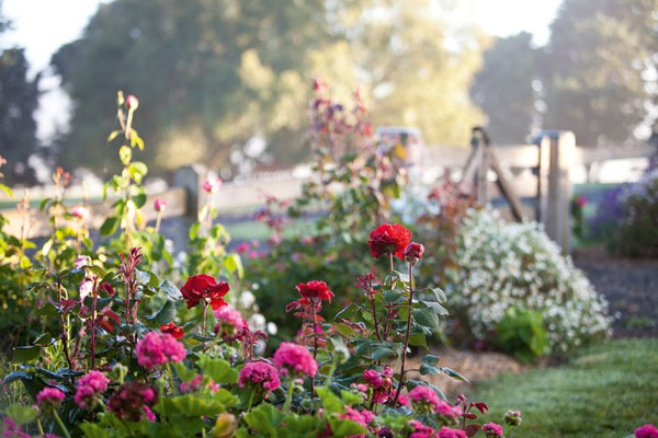 Ngắm ngôi nhà có khu vườn đầy nắng gió và hoa 4