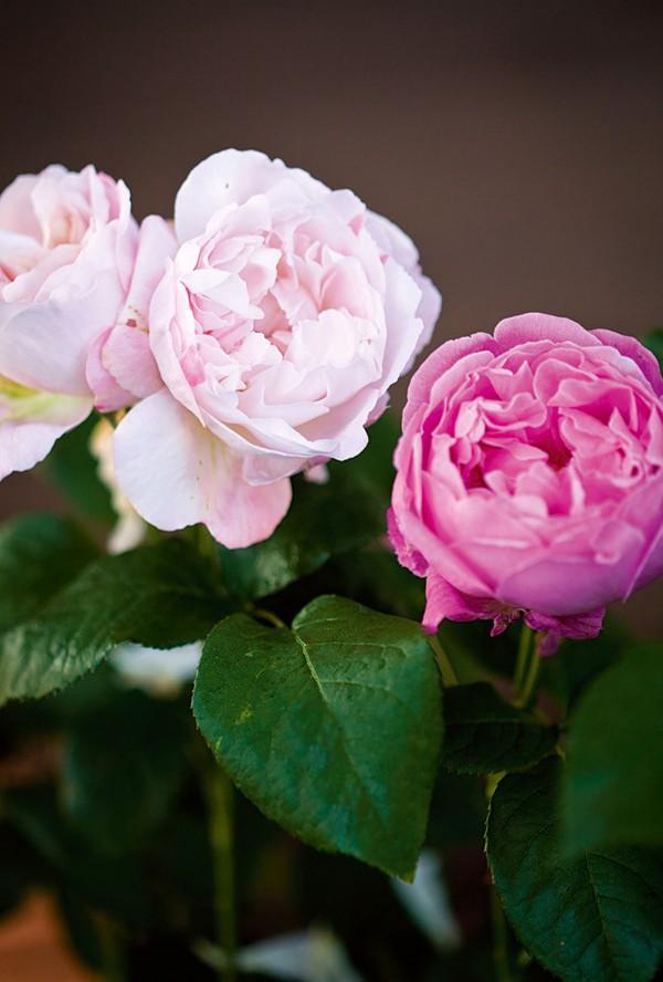 Ngắm ngôi nhà có khu vườn đầy nắng gió và hoa 5