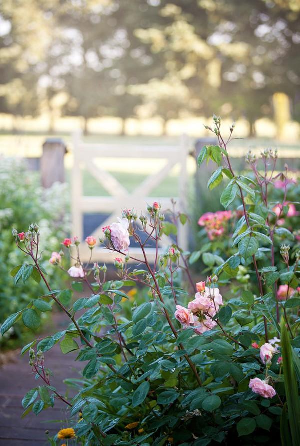 Ngắm ngôi nhà có khu vườn đầy nắng gió và hoa 9