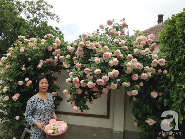 Ghé thăm khu vườn đậm chất Việt trên đất Hungary 10