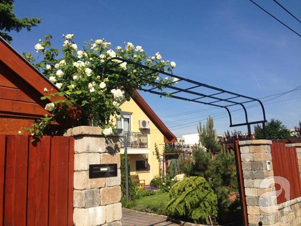 Ghé thăm khu vườn đậm chất Việt trên đất Hungary 1