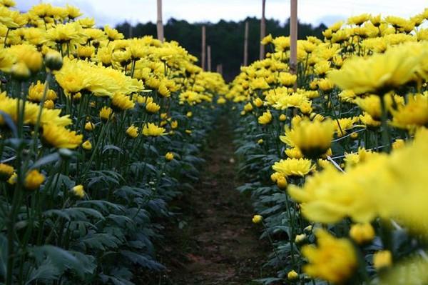 Chọn hoa, cây cảnh ý nghĩa trang trí nhà ngày Tết  17