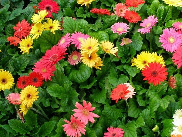 Chọn hoa, cây cảnh ý nghĩa trang trí nhà ngày Tết  13