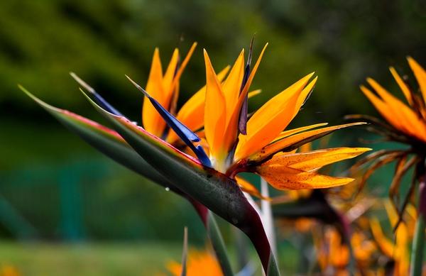 Chọn hoa, cây cảnh ý nghĩa trang trí nhà ngày Tết  15