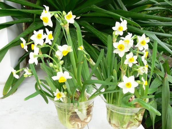 Chọn hoa, cây cảnh ý nghĩa trang trí nhà ngày Tết  21