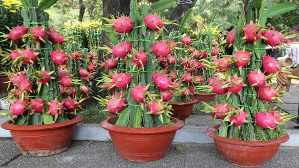Chọn hoa, cây cảnh ý nghĩa trang trí nhà ngày Tết  8