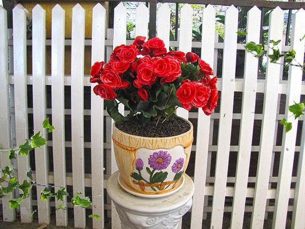 Chọn hoa, cây cảnh ý nghĩa trang trí nhà ngày Tết  12