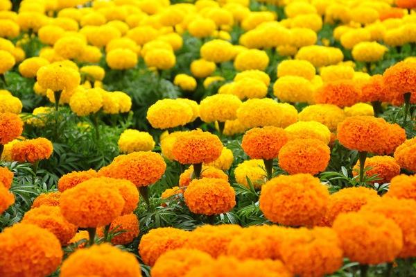 Chọn hoa, cây cảnh ý nghĩa trang trí nhà ngày Tết  16