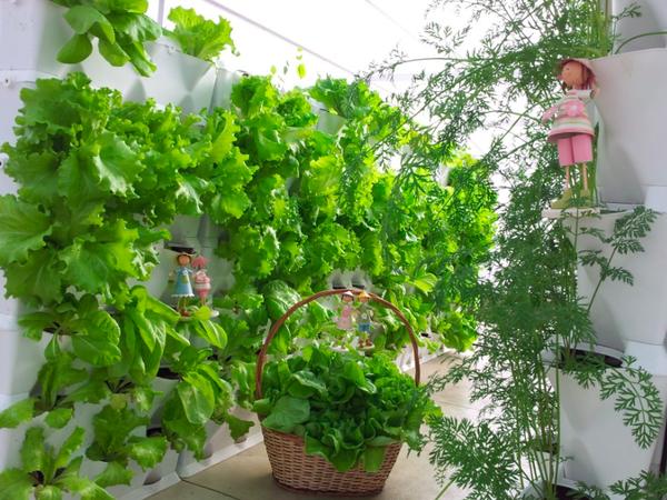 Ý tưởng làm vườn treo cực đơn giản 5