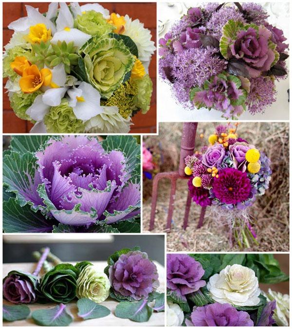 Làm đẹp vườn và trang trí nhà với hoa hồng sa mạc 8