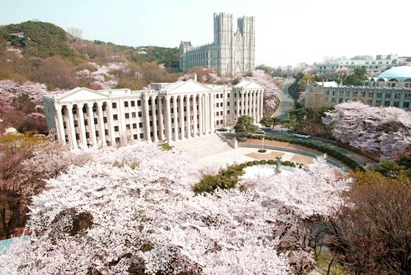 Quang cảnh tuyệt đẹp ở các địa điểm ngắm hoa anh đào tại Hàn Quốc 11