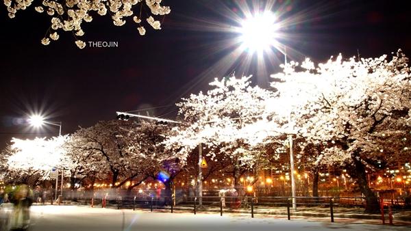 Quang cảnh tuyệt đẹp ở các địa điểm ngắm hoa anh đào tại Hàn Quốc 6