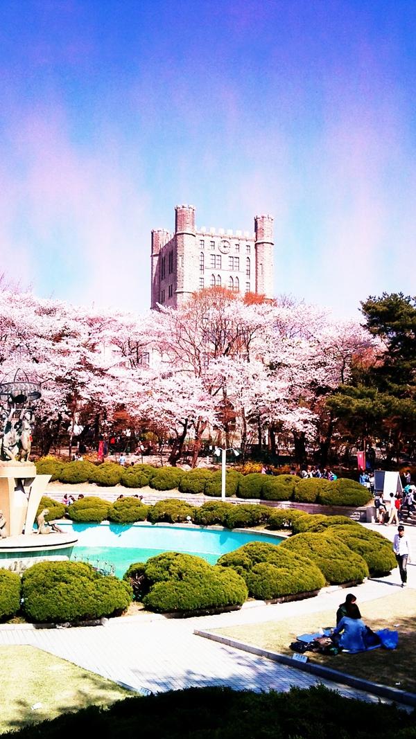 Quang cảnh tuyệt đẹp ở các địa điểm ngắm hoa anh đào tại Hàn Quốc 12