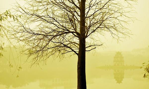 Hình ảnh độc đáo về tháp rùa hồ Gươm 5