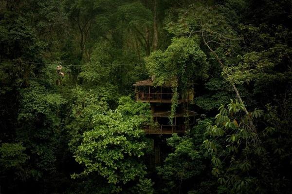 Đắm mình vào thiên nhiên trong ngôi nhà trên cây tuyệt đẹp  4