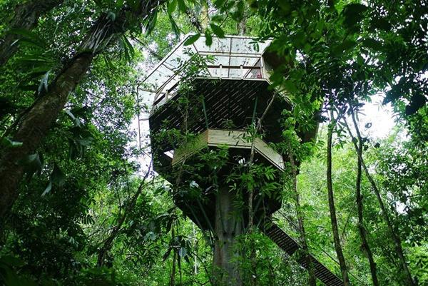 Đắm mình vào thiên nhiên trong ngôi nhà trên cây tuyệt đẹp  1