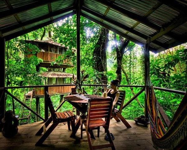 Đắm mình vào thiên nhiên trong ngôi nhà trên cây tuyệt đẹp  7