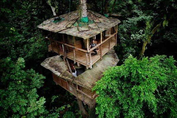 Đắm mình vào thiên nhiên trong ngôi nhà trên cây tuyệt đẹp  2