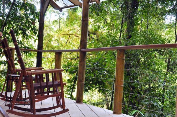 Đắm mình vào thiên nhiên trong ngôi nhà trên cây tuyệt đẹp  8