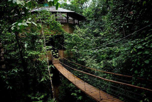 Đắm mình vào thiên nhiên trong ngôi nhà trên cây tuyệt đẹp  3