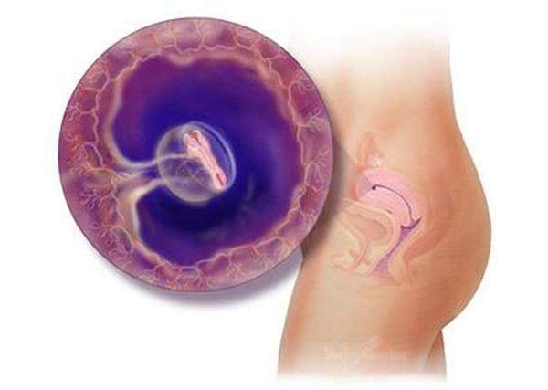 Sự phát triển của thai nhi trong bụng mẹ từ đầu đến cuối 4