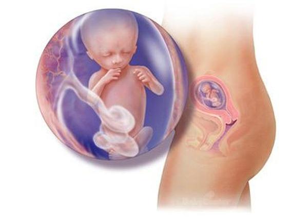 Sự phát triển của thai nhi trong bụng mẹ từ đầu đến cuối 14