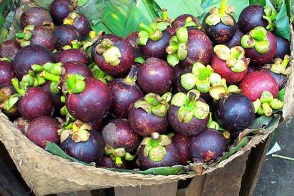 5 vườn trái cây đẹp thư giãn ngày hè 10