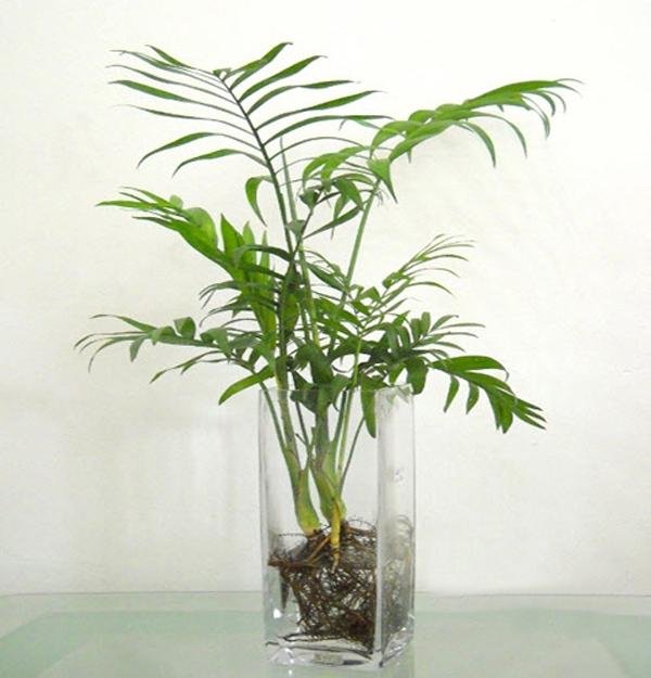 cau Những loại cây cảnh dễ trồng và có tác dụng thanh lọc không khí trong nhà