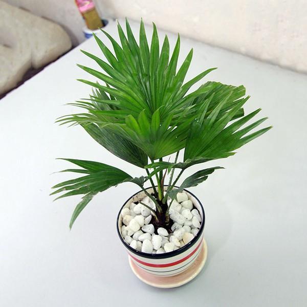 coh canh Những loại cây cảnh dễ trồng và có tác dụng thanh lọc không khí trong nhà